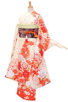 R305 クリーム オレンジぼかし 牡丹と菊桜(R1756)